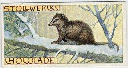 Stollwerck - Règne Animal – 29.4 (FR) – Sarigue Opossum - Stollwerck