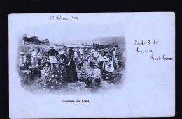 CEUILLETTE DES ROSES TIRAGE 1899 - Cultures