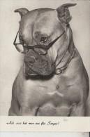 TIERE - HUNDE - BOXER Humor - Hunde