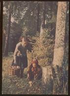 Stationery Card Mint 1954 USSR RUSSIA Mycology Mushroom Children RARE - 1923-1991 USSR