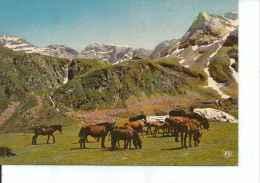 VALLS D`ANDORRA   OHL - Andorra