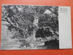 26807 PC: BUCKINGHAMSHIRE: Burnham Beeches, The Great Oak. - Buckinghamshire