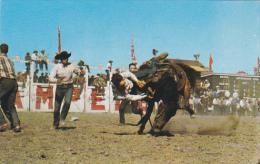 Bucking Horse Contest Calgary Stampede Alberta Canada