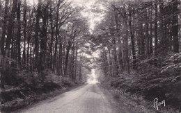¤¤  -  1367  -  LE GAVRE  -  Une Route De Forêt    -  ¤¤ - Le Gavre