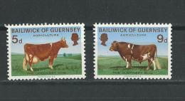 Guernesey: 27/ 28 * + 61 **  Vaches- Taureaux - Vaches