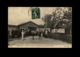 50 - SAINT-LÔ - Séance De La Commission D'Achat - Dépôt De Remonte - Cheval - Saint Lo