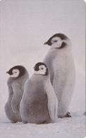 Phonecard Zambia Pinguins Used