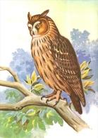 OWL BIRD ANIMAL DRAWING KEKESI LASZLO STAMP KESZTHELY FESTETICS PALACE OLYMPIAFILA OLYMPIC GAMES * Baglyok MFVH* Hungary - Pájaros