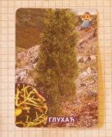 GLUHAĆ Arâr (Juniperus Phoenicea) - SERBIA ´70 (Yugoslavia) Deaf Tree /  Mediterranean Croatia Evergreen Tree ~ Shr - Other Collections