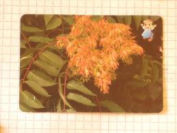 Tree Of Heaven  - Nature SERBIA ´70 (Yugoslavia) / Arbre Du Ciel, Ailanthus Altissima,  / Plant, Tree - Other Collections