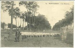 91, Essonne, MONTGERON, Les Moutons, Berger Et Ses Chiens,, Scan Recto-Verso - Montgeron