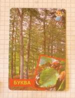 Beech - Nature SERBIA ´70 (Yugoslavia) / Hêtre Buche Faggio / Plants Tree Arbre - Other Collections