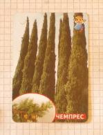 Cypresses - Nature SERBIA ´70 (Yugoslavia) / Cyprès Cipressi Zypressen / Plants Tree Arbre Baum - Unclassified