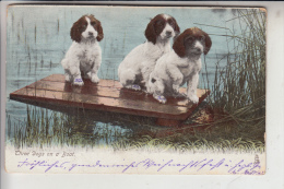 """TIERE - HUNDE - """" Three Dogs Ona Boat - Junge Hunde, 1905, Tuck Animal Life - Chiens"""