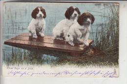 """TIERE - HUNDE - """" Three Dogs Ona Boat - Junge Hunde, 1905, Tuck Animal Life - Hunde"""