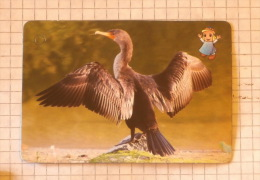 Cormorant - Nature SERBIA ´70 (Yugoslavia) / Cormorano Kormoran  / Bird Oiseau Pájaro Vogel Uccello - Unclassified