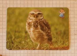 Little Owl ~ Boreal Owl (Aegolius Funereus) Fune Nature SERBIA ´70 (Yugoslavia) Eule Chouette Civetta Bird Oiseau Vogel - Unclassified