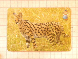 SERVAL  - Nature SERBIA ´70 (Yugoslavia) African Wild Cat / Wild Cat, Chat Gatto Katze Gato / Animal - Other Collections