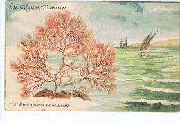 Cpa Illustrée Les Algues Marines , N° 5 Plocanium Coccineum - Sin Clasificación