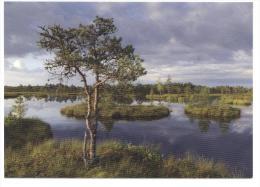 Estonia. Estonie. Estland. Kakerdaja Fen Hiking Track. Wanderweg Durch Das Hochmoor Kaderdaja. Rämeen Retkipolku. - Estonie