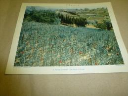 Année 1954  Grande Photographie En Couleurs PAYSAGE De PROVENCE à GRASSE  (27cm X 21cm) - Plaatsen