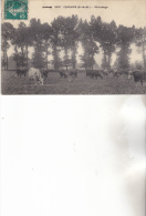 77 Champs- Paturage- CP N°360.  Sans Indication Editeur Datée 1911. Animée Tb état. - Other Municipalities
