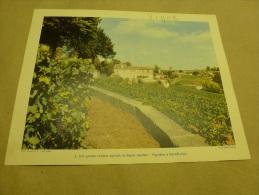 Photo René Jacques  1954  Grande Photographie En Couleurs (27cm X 21cm) Mas Et Vignoble à SAINT-EMILION .. - Lugares