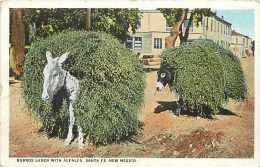 Pays Divers- Etats Unis -usa -ref A236-burros Laden With Alfalfa -santa Fe , New Mexico -ane -theme Anes - - Santa Fe