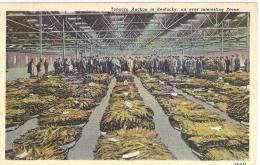 Tobacco Auction In Kentucky An Ever Interesting Scene   -  Belle Carte!!! - Etats-Unis