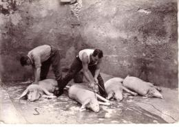 09 -ax Les Thermes - Pelage De Cochons A La Source Du Rossignol - - Ax Les Thermes