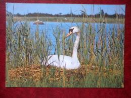 Mute Swan - Cygnus Olor - Birds - 1987 - Estonia - USSR - Unused - Oiseaux
