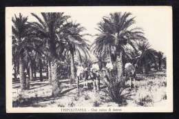 AFR3-09 LIBIA TRIPOLITANIA OASI CARICO DI DATTERI - Libya