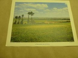 1955 Grande Photo En Couleurs (27cm X 21cm)  La Plaine Picarde Près De PERONNE..  Envoi Gratuit - Lieux