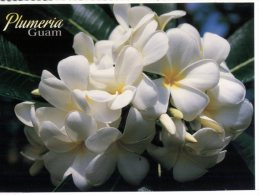 (987) Island Of Guam - Plumeria - Guam