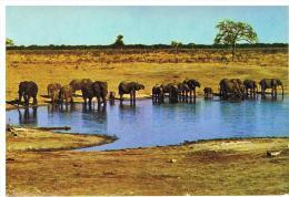 Safari Au Mozanbique - Elefantes