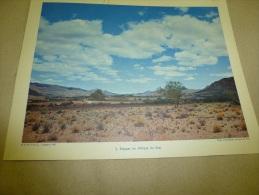 Photo Ambassade D'Afrique Du Sud En 1957  (27cm X 21cm)  La Steppe En AFRIQUE Du SUD   Envoi Gratuit - Afrique