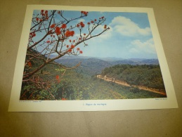 Photo Ambassade D´Afrique Du Sud En 1957  (27cm X 21cm)  Ruwenzori Vu à 1500m D´altitude  AFRIQUE Du SUD   Envoi Gratuit - Afrique