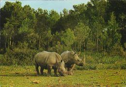 Spanien - Mallorca - Safari Ruhe - Nashörner - Rhinoceros - Nice Stamp - Mallorca