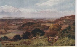 A R QUINTON 1422 - VIEW FROM NEWLANDS CORNER, Nr GUILDFORD - Quinton, AR