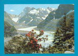 CPM  FRANCE  74  -  CHAMONIX  -  7519  La Mer De Glace, Le Massif Des Grandes Jorasses  ( En 1981 ) - Chamonix-Mont-Blanc