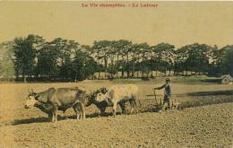 Attelage De Boeufs - Le Labour - Cultures