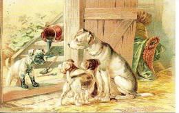 20 Cane Chien Dog Carte Postales CPM Cartoline Chiens Perro Cao Hind - Hunde