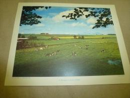 Cliché   Almasy En 1956  (27cm X 21cm)   Elevage En SCANIE (Suede)....une Ferme Et Des Vache               Envoi Gratuit - Lieux