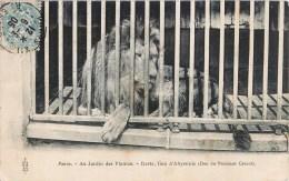 PARIS AU JARDIN DES PLANTES DESTA LION D'ABYSSINIE DON DU PRESIDENT CARNOT PARC ZOOLOGIQUE ANIMAUX 1900 - Parques, Jardines