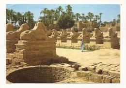 Cp, Egypte, Karnak, The Famous Sphinx Avenue At Amon Temple, écrite 1990 - Autres