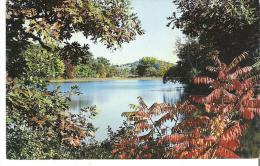 Dans Le Bois, In The Woods, L'Avenir, Cte. Drummond, Quebec  Fernando Boisvert  Epicier-Boucher - Autres