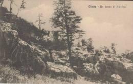 1915 COLONIE ITALIANE - CIRENE - UN BOSCO DI AIN-OFRA - ED. PLATONI - Libye