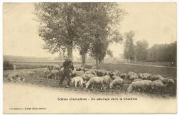 SCENES CHAMPETRES Un Pâturage Dans La Charente Berger Chien Moutons (Breger) Charente (16) - Non Classés