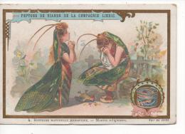 CHROMOS DORE LIEBIG, N° 4  Histoire Naturelle Enfantine - Mantes Religieuses,  SUPERBE - Liebig