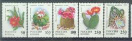 RUS 1994-363-7 CACTES, RUSSIA, 1 X 5v, MNH - Sukkulenten